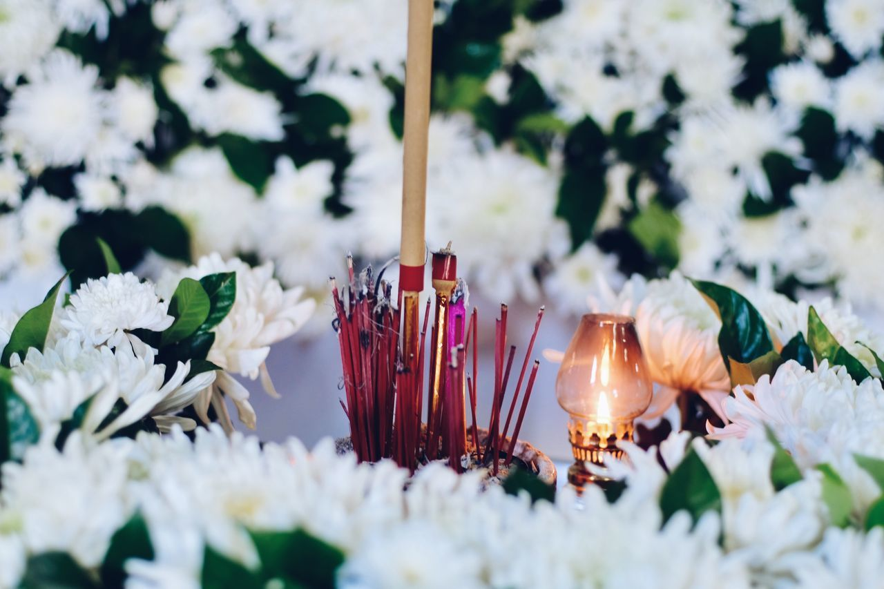 candle, burning, flame, spirituality, religion, no people, flower, close-up, selective focus, indoors, scented, nature, fragility, day