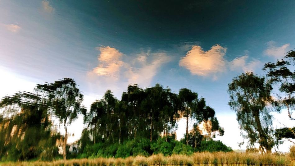 Camp site, tranquility, water reflection, perfect scenery Tree Plant Sky Cloud - Sky Beauty In Nature Growth Tranquility Tranquil Scene Scenics - Nature Landscape Outdoors Nature