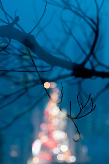 Bare Tree Beauty In Nature Branch Close-up Dusk Focus On Foreground Glowing Illuminated Lens Flare Lighting Equipment Low Angle View Nature Night No People Outdoors Planetary Moon Plant Selective Focus Silhouette Sky Tranquility Tree The Still Life Photographer - 2018 EyeEm Awards