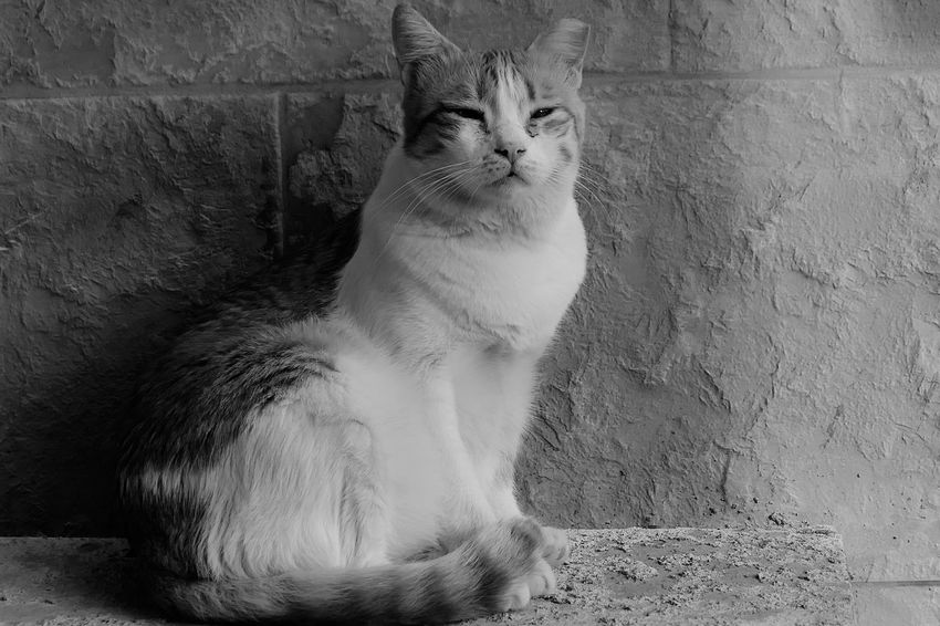 City Life Street Photography Cat Domestic Cat Animal Themes One Animal Feline Animal Pets Domestic Animals Portrait No People Relaxation Day Wall - Building Feature