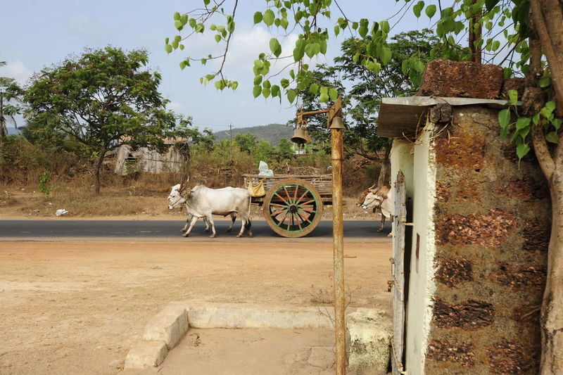 View of a horse cart