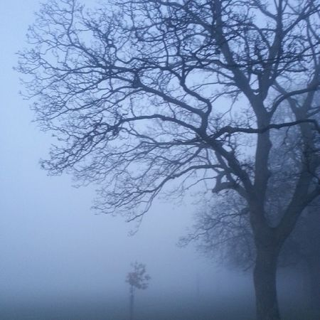 :o Foggy Winter London Ealing