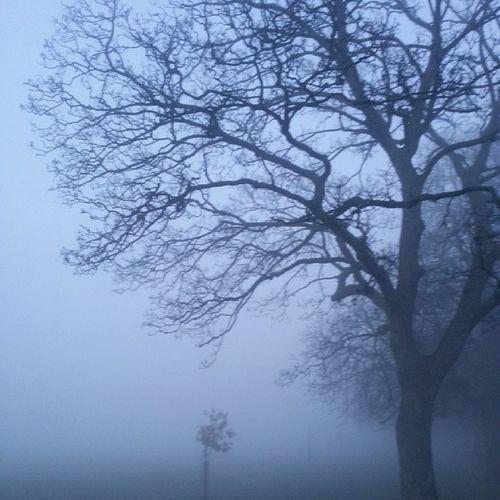 :o Foggy Winter London Ealing