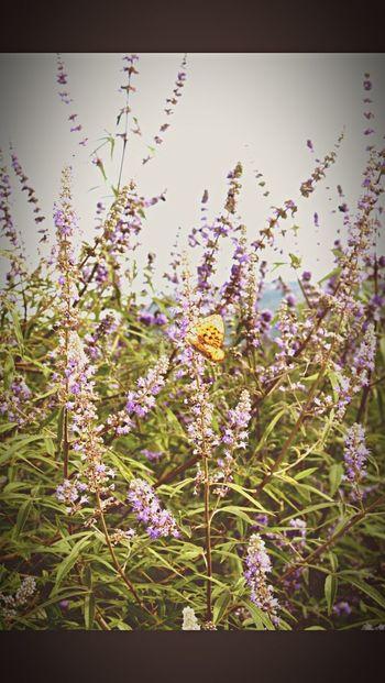 Nature Butterfly Flowers Summer