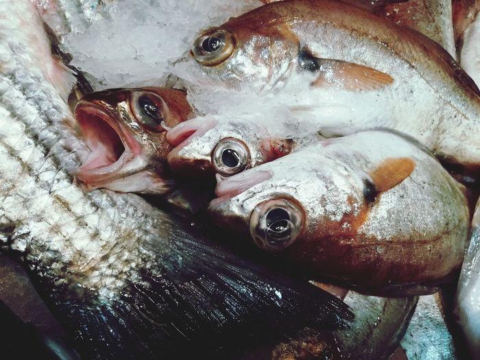 Fishe's eyes