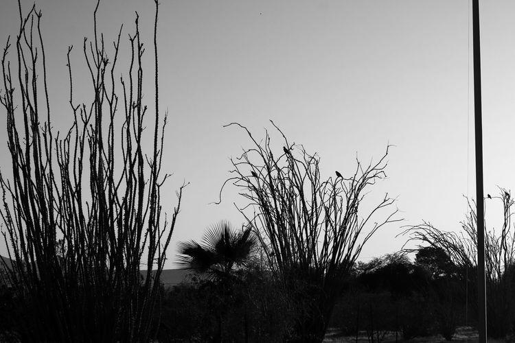 Sky Desert Bnw