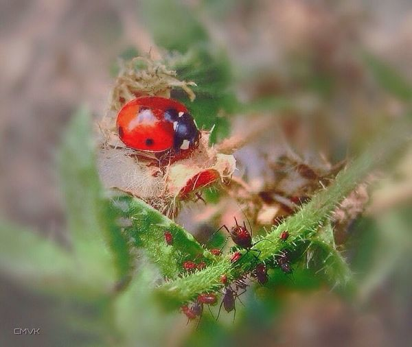 EyeEm Nature Lover Nature Nature_collection Nature Photography Flowers Flower Ladybug Colors Insects  Colourful