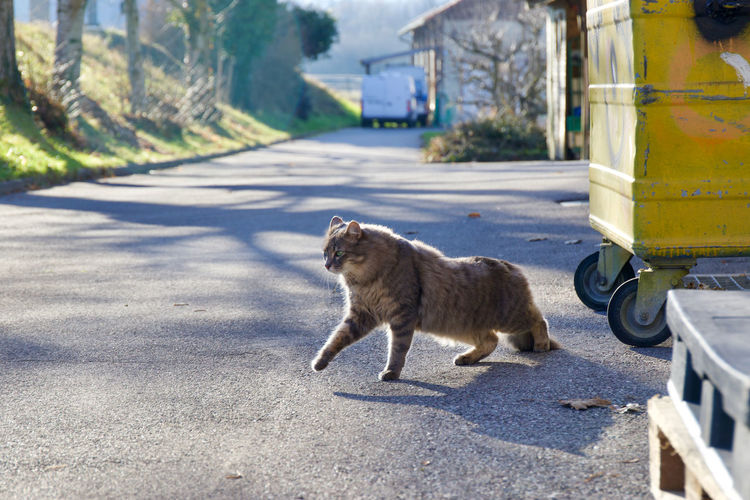 View of cat on street