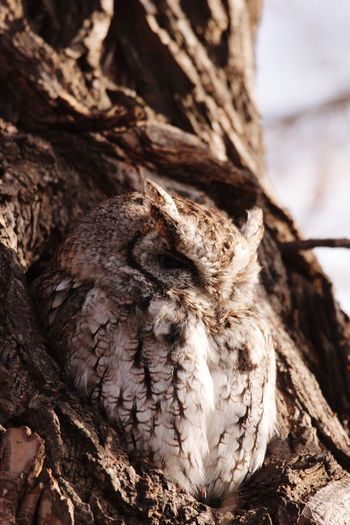 Close-up of owl perching on tree trunk