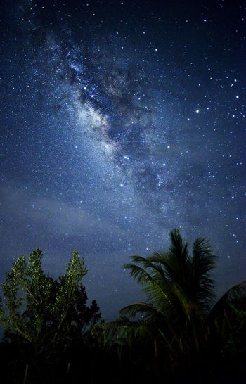 milky way galaxy. Tree Night Sky Space Star - Space Plant Astronomy Beauty In Nature Scenics - Nature Nature Tranquility Galaxy No People Palm Tree Tranquil Scene Growth Tropical Climate Low Angle View Silhouette Star Outdoors Milky Way