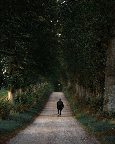 Rear View Of Man Walking On Footpath Amidst Trees