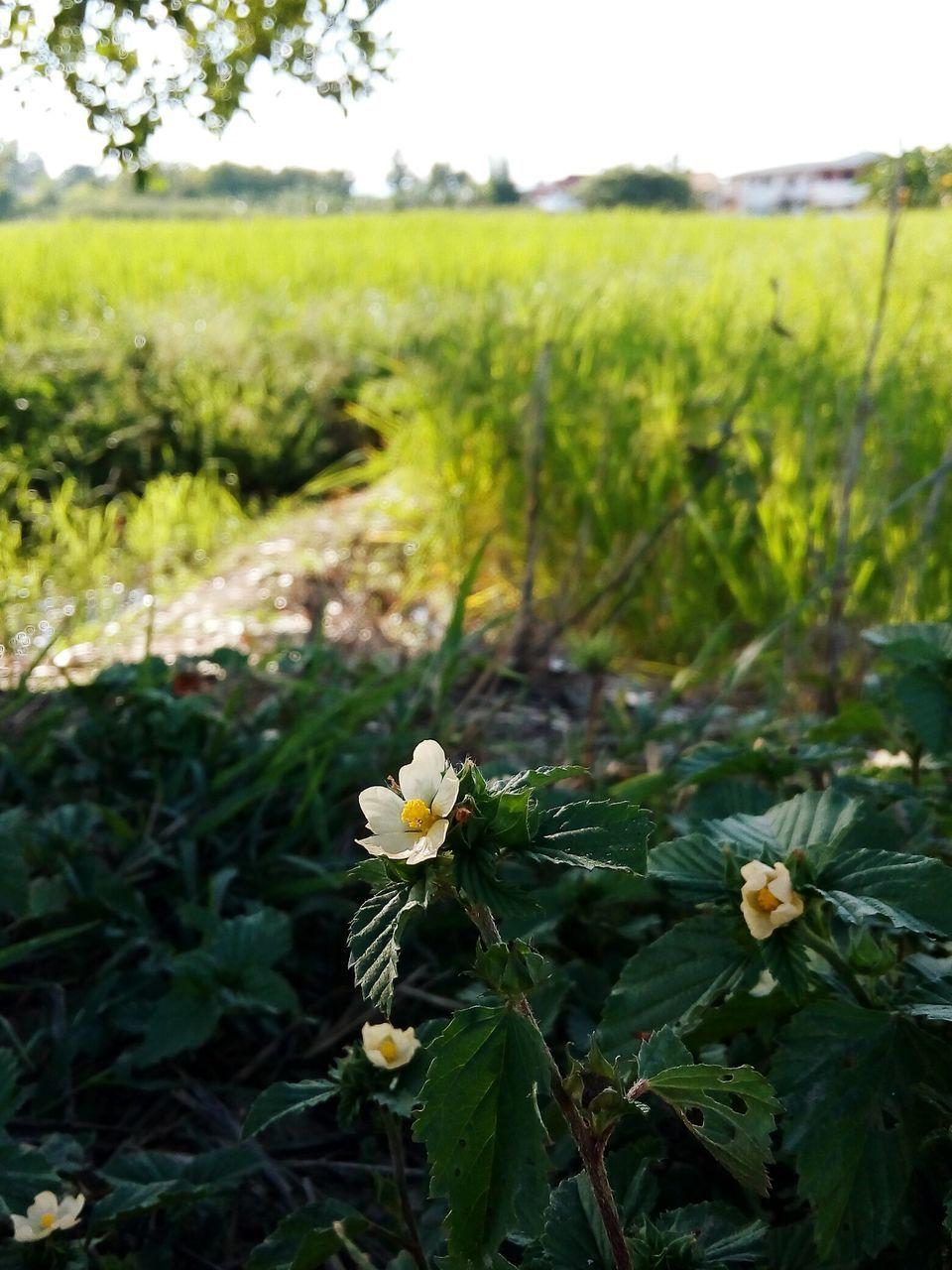 Flowers Growing On Landscape