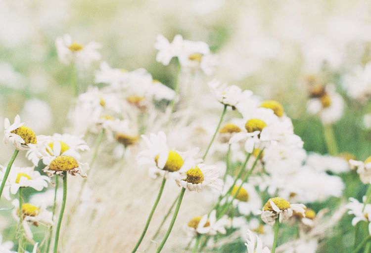 Feel The Journey Flowers Filmcamera Film Nature Plant