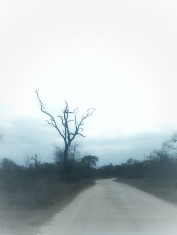 Standing alone. Bare Tree Landscape Nature Fog No People Tree Beauty In Nature Outdoors Day Rural Scene Sky Best Photos The Week On Eyem Newest Talent