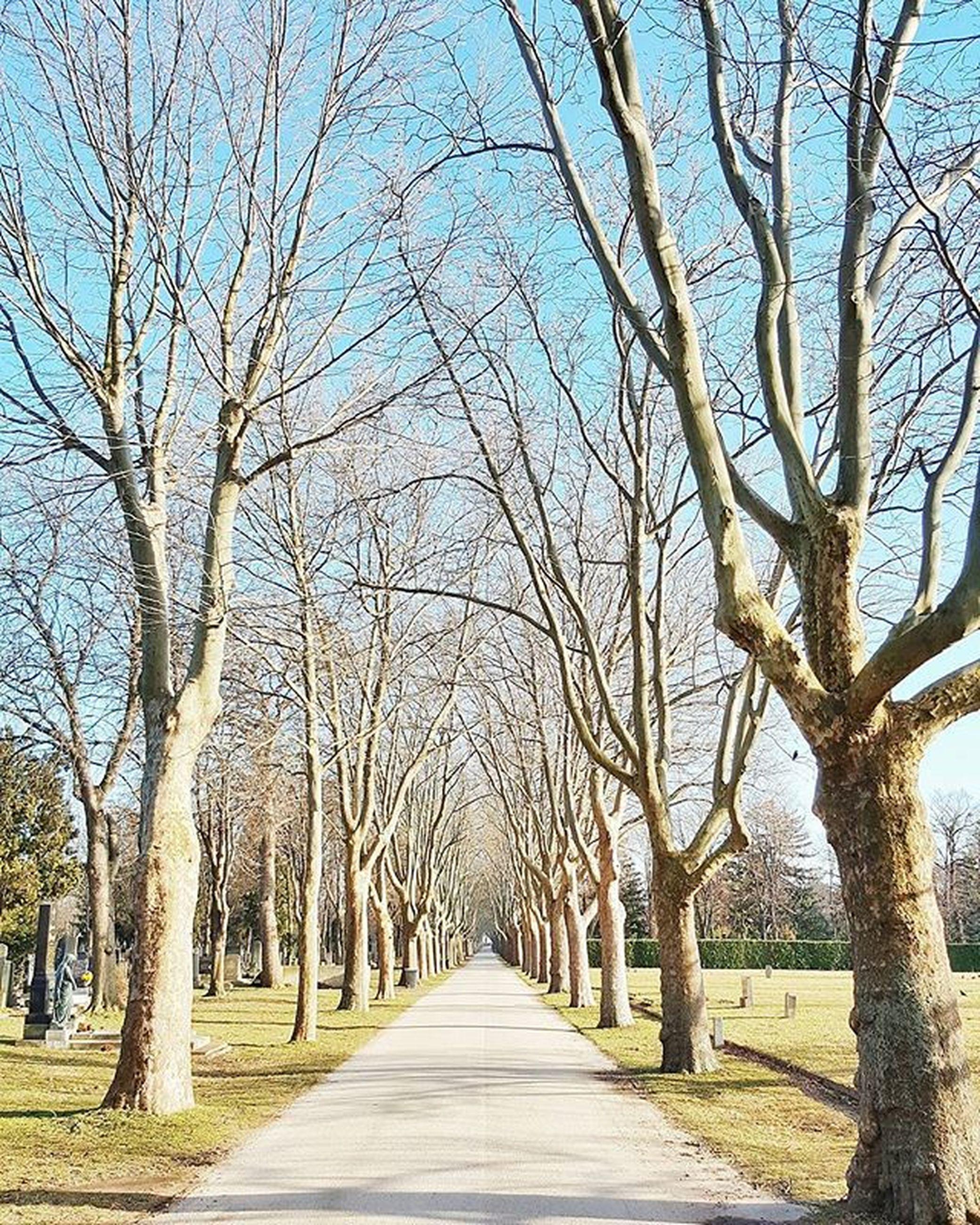 tree, the way forward, bare tree, diminishing perspective, treelined, branch, vanishing point, tranquility, tree trunk, tranquil scene, footpath, nature, long, walkway, empty, road, empty road, scenics, sky, narrow