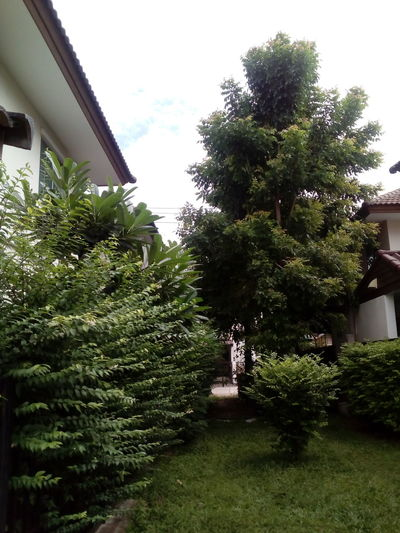 Garden. Garden