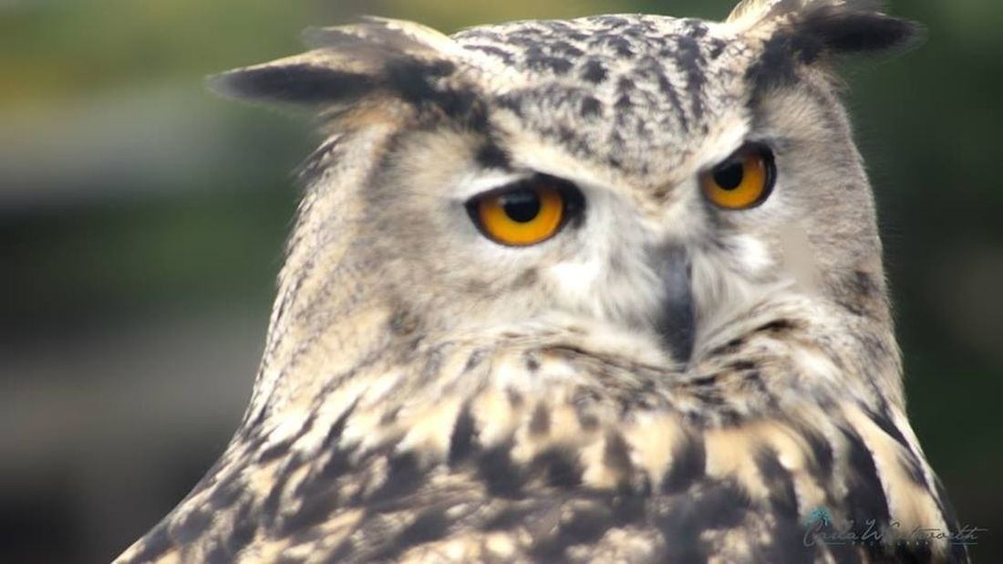 My Photography Carla Wentworth Photography Owl Camera