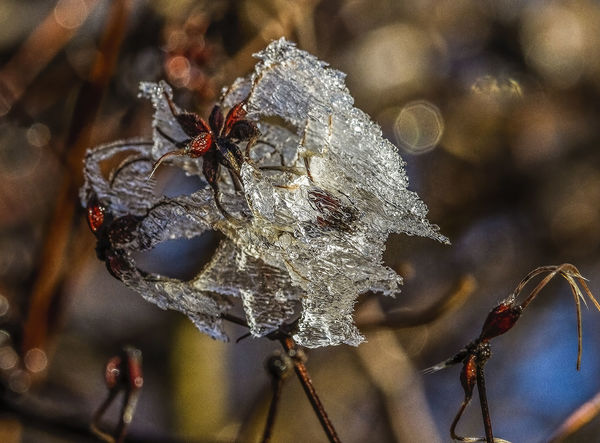 ice melt Ice Nature Animal Themes Beauty In Nature Close-up Cold Temperature Day Focus On Foreground Leaf Nature No People Outdoors Sculpture Snow Tree Winter