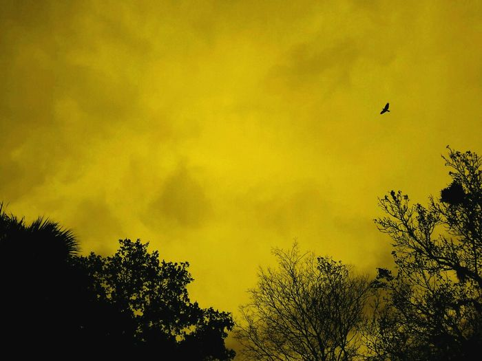Gold Sky Flying Silhouette Yellow Tree Nature Bird Beauty In Nature No People Animal Wildlife One Animal Outdoors Sky Paint The Town Yellow