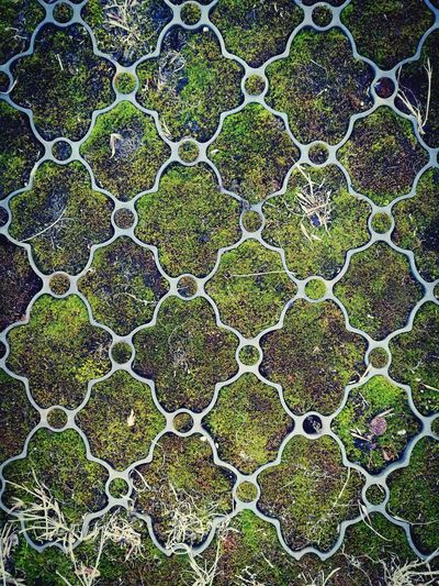 Full Frame Backgrounds Pattern Close-up Textured  Microbiology Day Outdoors Nature Moss Mosscarpet