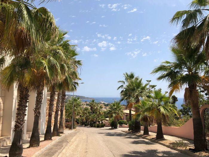 palms avenue