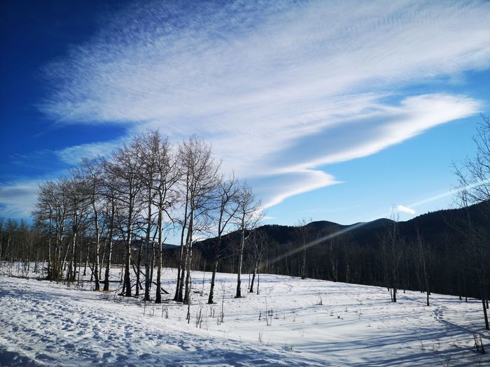 Bare trees on snowcapped field against sky