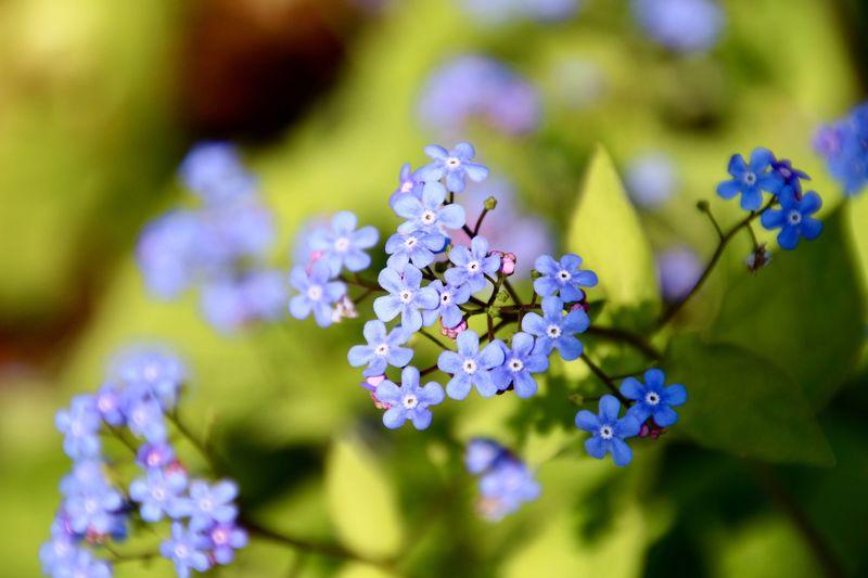 BLUE Filigran