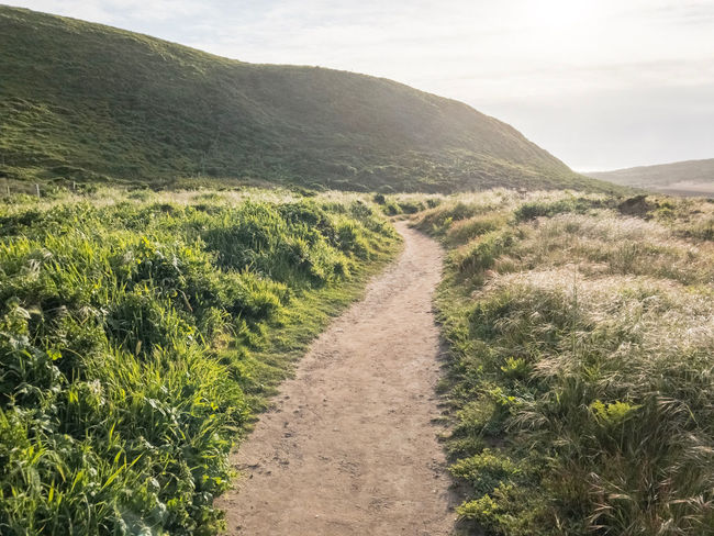 Abbotts Lagoon trail at Point Reyes National Seashore. California, USA. Photo by Tom Bland. Abbotts Lagoon California Coastal Idyllic IPhone IPhoneography Landscape Nature Outdoors Point Reyes Point Reyes National Seashore Rural Serene Spring Tranquil Scene Tranquility Path Pathway Footpath Trail Sunlight The Way Forward