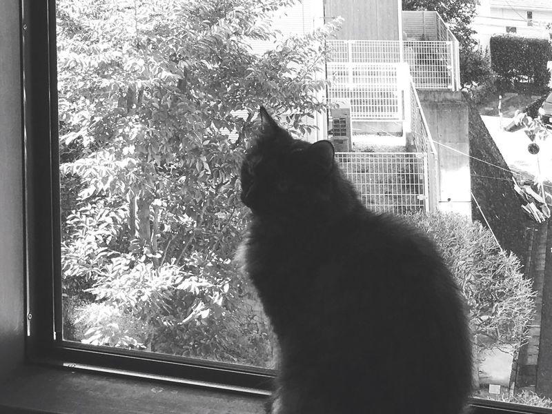 Zen Cat Domestic Cat Window Pets Japan