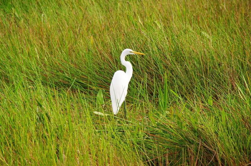 White crane on grassy field during sunny day