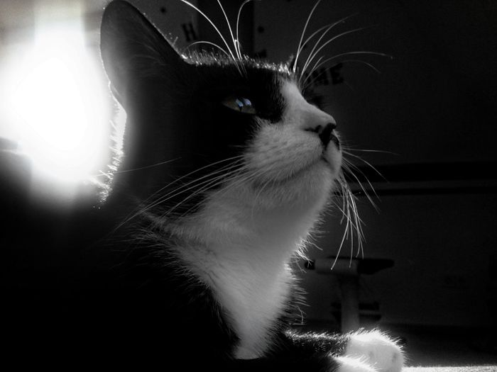 One Animal Pets Animal Themes Mobile Photography B&W Portrait One Person Cat Portrait Looking At Camera Black Background B&w Photography Cat♡ Black And White Eyes