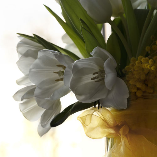 Flowering Plant Flower Plant Beauty In Nature Freshness Close-up Flower Head Growth Nature White Color Day Indoors  Celebration Tulip Green Flower Collection Flowers Yellow EyeEm Nature Lover EyeEm Gallery