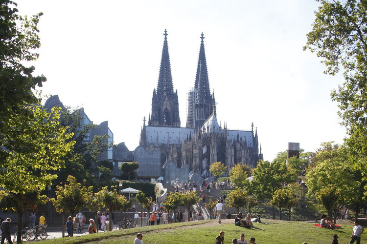 cathedral with meadow, Cologne, Germany, Europe Architecture Building Exterior Built Structure Church City Cologne Day Domestic Animals Germany Köln Meadow Museum Ludwig No People Outdoors Place Of Worship Religion Sky Tower Travel Destinations Tree