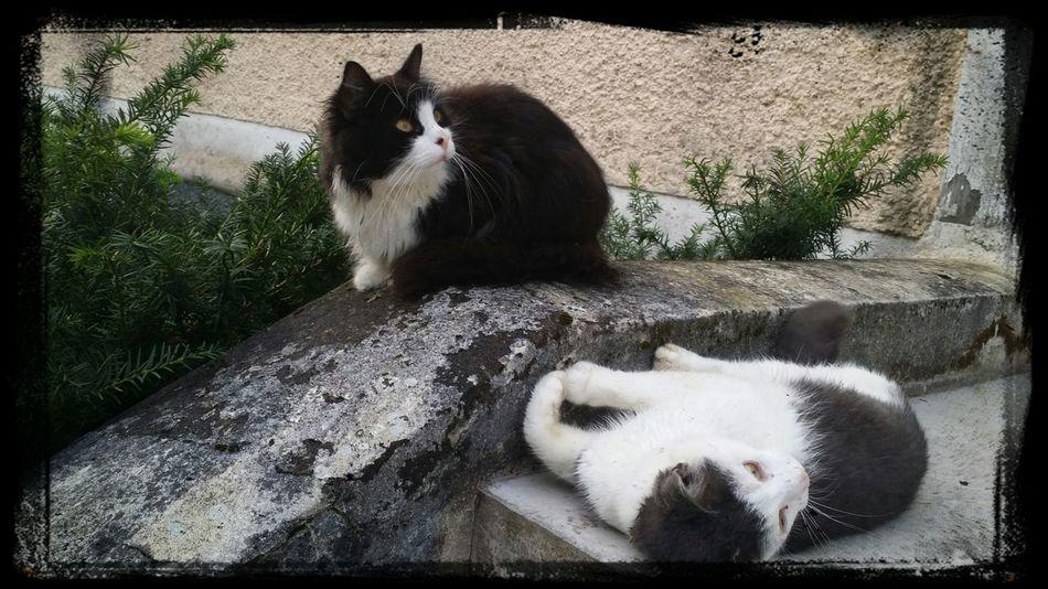 Birdie nam nam.. Cats Relaxing