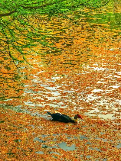 High angle view of bird swimming in lake