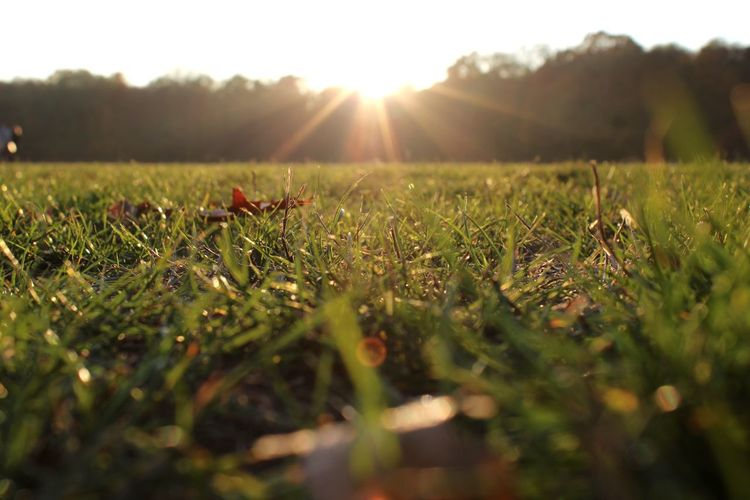Surface level of grass on field against bright sun