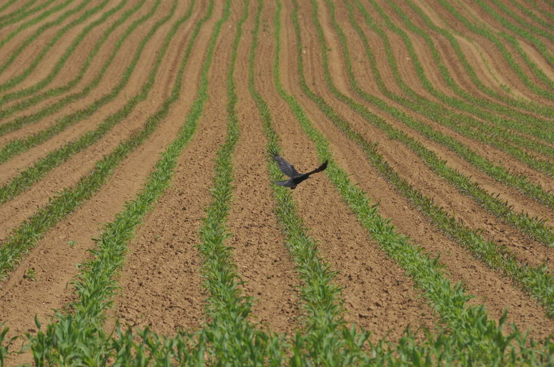 High angle view of bird flying over field
