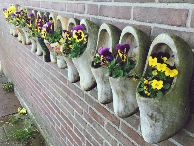 Wooden clogs reinvented Interesting Perspective  Netherlands Nature Netherlands Flowers Flower Wooden Clogs Clogs Plant Flower Flowering Plant No People Nature Architecture Day Potted Plant Art And Craft Outdoors Building Exterior Beauty In Nature