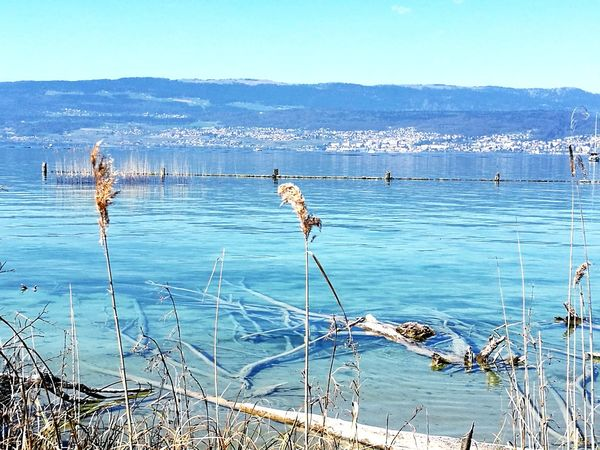 Nature Water Beauty In Nature Outdoors Holidayfeeling Yverdon-les-Bains