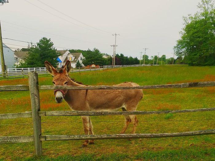 New Friend Outdoors Donkey Animals Nature Donkies