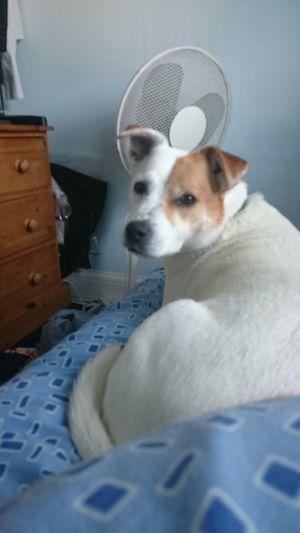 Cute Pets Cuteeee♥♡♥ Dog Pets One Animal No People Dog Staring At Camera Bedroom Bed