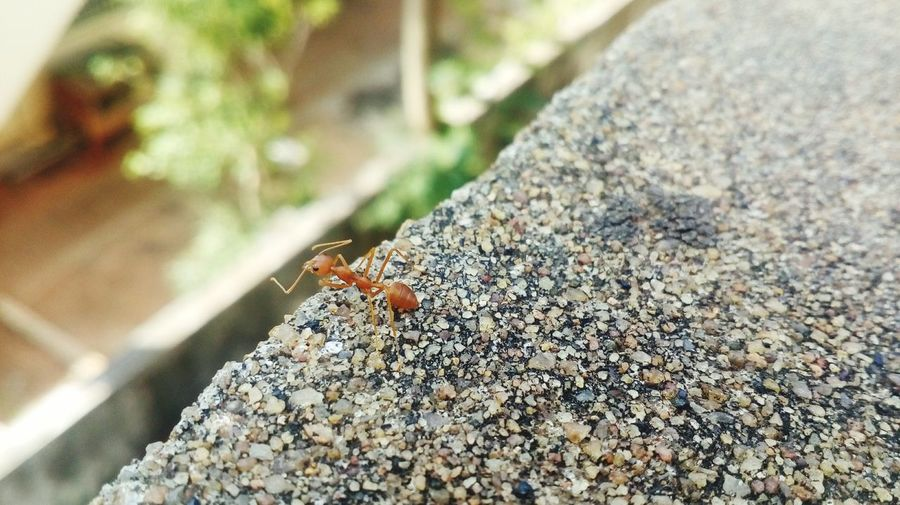 Ant sucide One Animal First Eyeem Photo