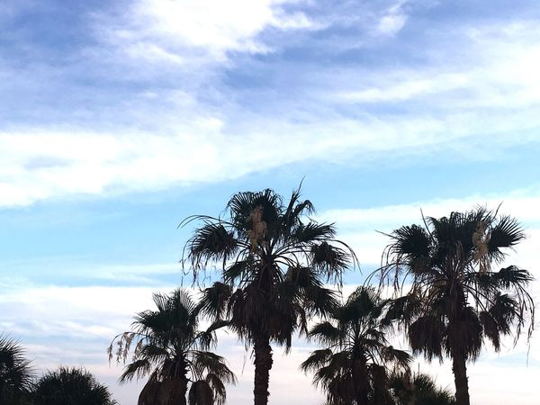Beach Palm Tree Sky