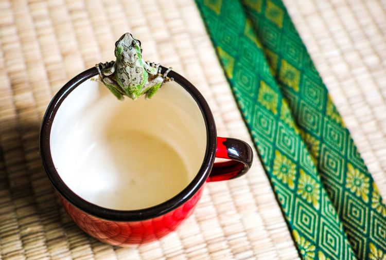 a cup of frog