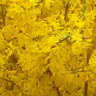 Yellow Yellow Giallo Fiori Saturazione Flowers Flower Giardini Primavera