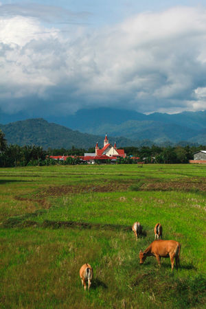 Once in a while, you'll come across a scenery that takes your breath away. This was it for me. Cloud INDONESIA Mamasa Rice Paddy Cattle Mountain