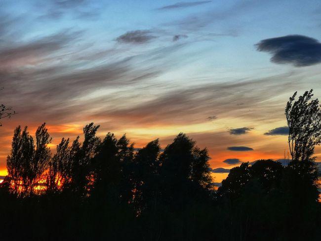 Tree Tree Area Sunset Silhouette Forest Dramatic Sky Sky Landscape Cloud - Sky