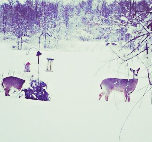 Deer Nature EyeEm Nature Lover Beautiful Nature Nature_collection Snow Contry Living Enjoying Life Photography Beautiful