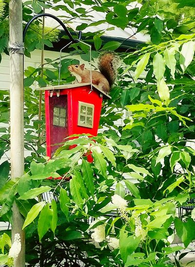 Leaf Day Green Color Red No People Outdoors Tree Nature Beauty In Nature Squirrel Bird Feeder Red Highlight EyeEmNewHere Park
