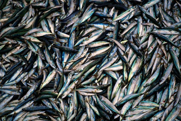 mackrel fish at the market Mackrel Food Fish Organic Backgrounds Full Frame Complexity Pattern Close-up Fishing Net Fishing Industry Fishing Catch Of Fish Pile Large Group Of Animals Fish Market